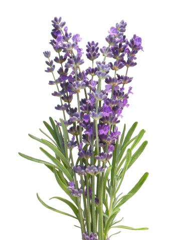 Lavender Color「Lavender」:スマホ壁紙(11)