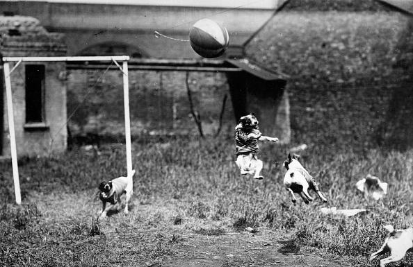 Humor「Football Crazy」:写真・画像(3)[壁紙.com]