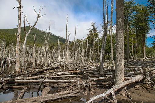 cloud「Dead trees in Tierra del Fuego, Argentina 」:スマホ壁紙(6)