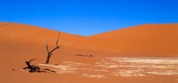 Namibian Desert「Dead Trees in Sand Dunes」:スマホ壁紙(2)