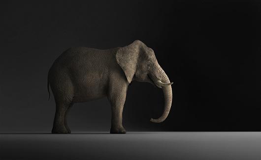 象「Elephant standing indoors」:スマホ壁紙(9)