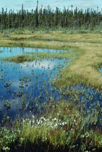 Boreal Forest「Wilderness wetland in James Bay, Quebec」:スマホ壁紙(6)