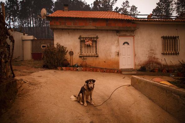 座る「Dozens Dead In Forest Fire In Portugal」:写真・画像(13)[壁紙.com]