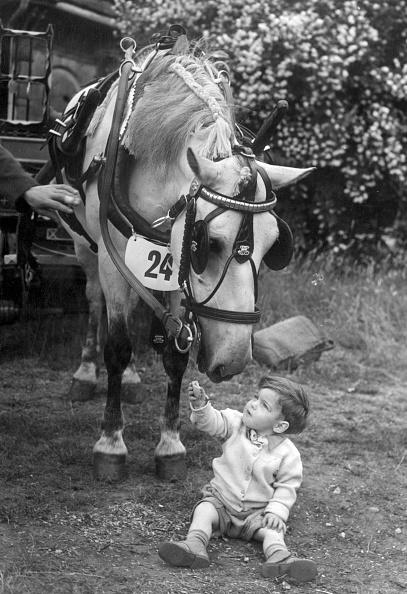 Monty Fresco「Coster's Pony」:写真・画像(7)[壁紙.com]