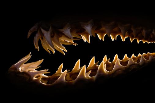 Shark「Mako shark jaws terrifying toothy silhouette」:スマホ壁紙(16)