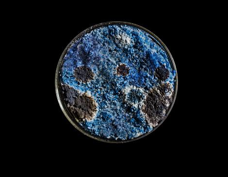 Deterioration「Mould growth in a Petri dish」:スマホ壁紙(8)