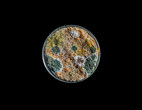 Deterioration「Mould growth in Petri dish」:スマホ壁紙(9)
