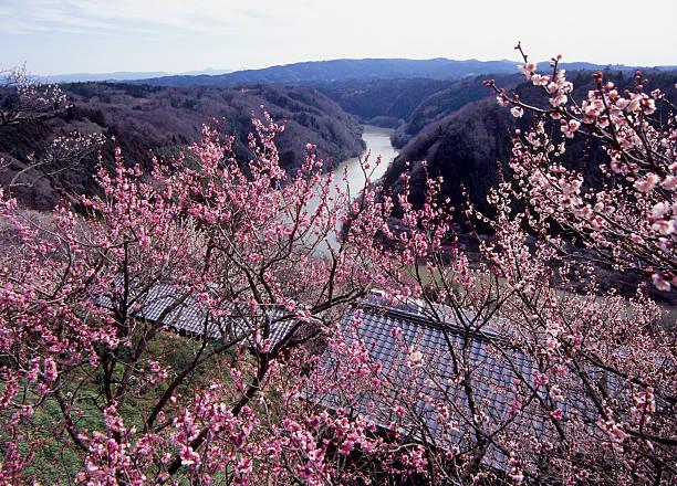 Tsukigase Plum Valley, Nara, Nara, Japan:スマホ壁紙(壁紙.com)
