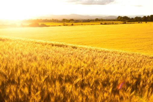 Harvesting「Glowing Grasslands」:スマホ壁紙(16)