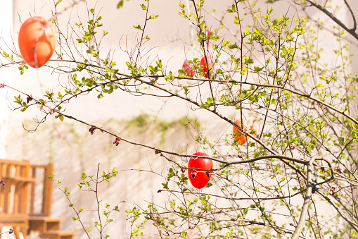 イースター「Red and orange Easter eggs hanging at twigs」:スマホ壁紙(1)