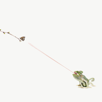 Eating「chameleon sticking out tongue to catch butterfly」:スマホ壁紙(14)