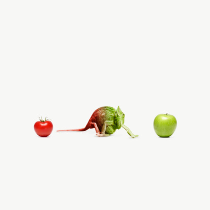 Choice「chameleon standing between an apple and a tomato」:スマホ壁紙(18)