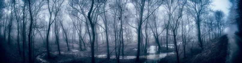 Horror「Haunted Forest」:スマホ壁紙(4)