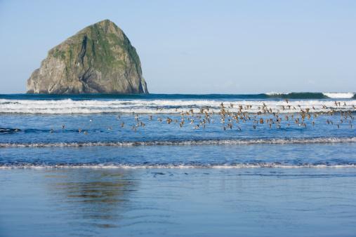 Haystack Rock「Flock of Western Sandpipers (Calidris mauri) flying over breakers」:スマホ壁紙(18)