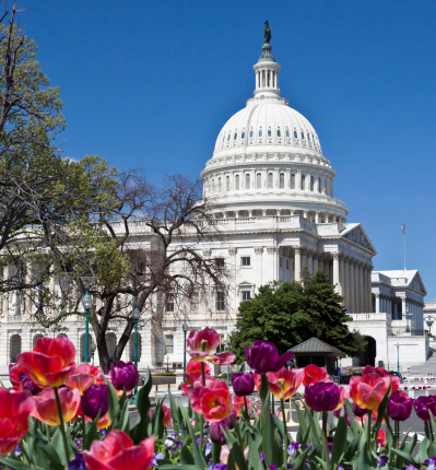 Legislation「Capitol Building and red flowers, Washington DC. Clear blue sky.」:スマホ壁紙(9)