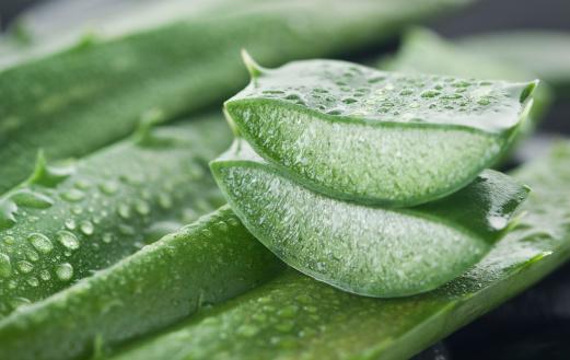 Healing「Aloe vera」:スマホ壁紙(0)