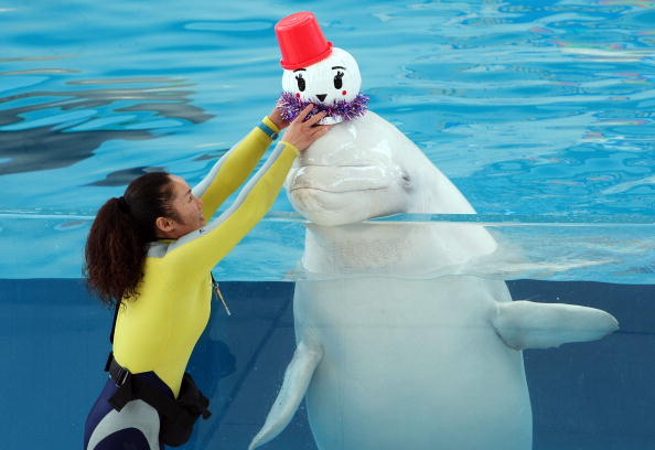 雪だるま「Christmas Shows Start At Aquarium In Japan」:写真・画像(5)[壁紙.com]
