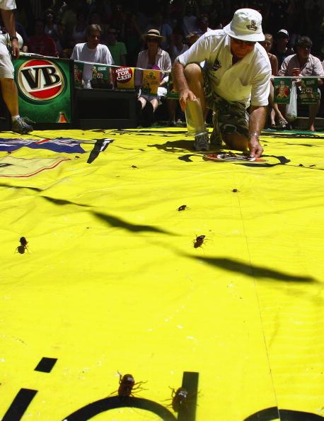 ゴキブリ「World Championship Cockroach Racing」:写真・画像(19)[壁紙.com]
