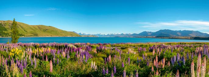 New Zealand「Lake Tekapo Panoramic」:スマホ壁紙(5)