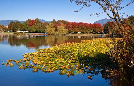 秋「Trout lake in autumn, Vancouver, British Columbia, Canada」:スマホ壁紙(5)