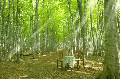 アーカイブ画像「Chairs and table in a forest clearing, Tsuta-numa, Aomori Prefecture, Japan」:スマホ壁紙(5)