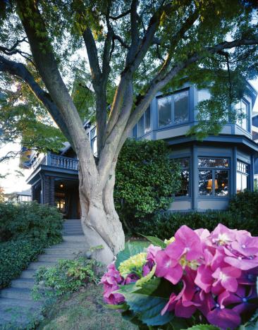 あじさい「Exterior of home, hydrangea planted in front, low angle view」:スマホ壁紙(15)