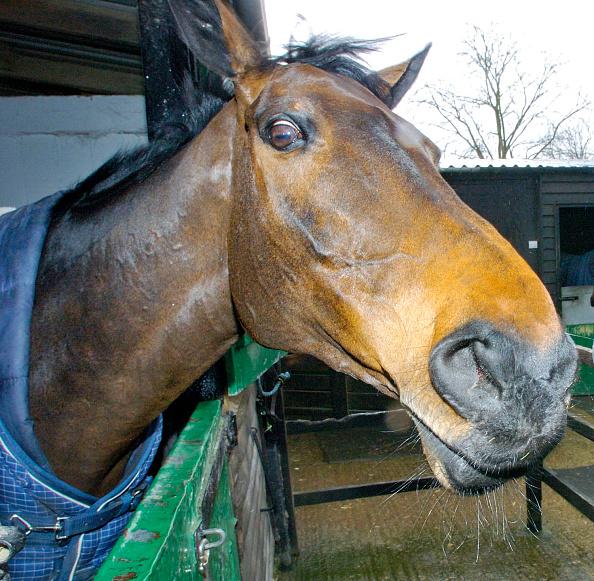Mammal「Best Mate racehorse 2005」:写真・画像(18)[壁紙.com]