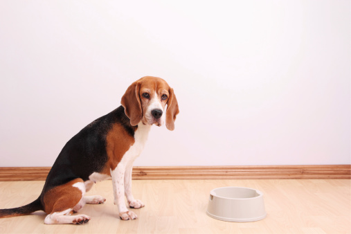 Pet Food「My bowl is empty」:スマホ壁紙(2)