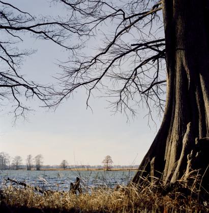 アーカンソー川「River scenic, tree in foreground, winter」:スマホ壁紙(15)