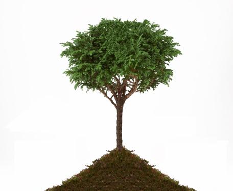Planting「1st Tree」:スマホ壁紙(6)