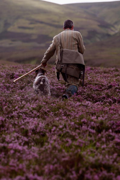 Cultures「Gamekeepers Prepare For Launch of Red Grouse Shooting Season」:写真・画像(3)[壁紙.com]