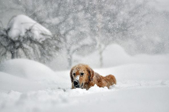 Blizzard「Record Snowstorm Pummels Buffalo」:写真・画像(10)[壁紙.com]
