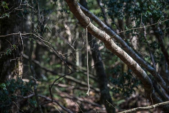 Suicide「Japan's Suicide Forest」:写真・画像(15)[壁紙.com]