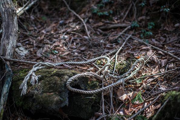 Rope「Japan's Suicide Forest」:写真・画像(0)[壁紙.com]