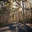 カリ森林壁紙の画像(壁紙.com)