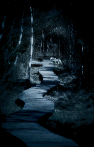 Wolf「Dream of a dark path in the woods and encountering a wolf」:スマホ壁紙(17)