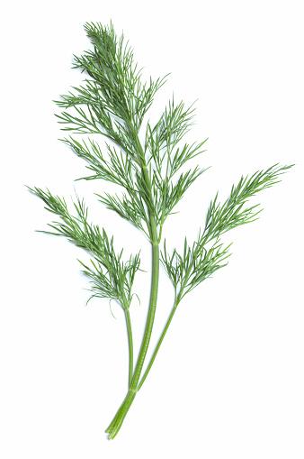 Branch - Plant Part「Single green sprig of dill plant」:スマホ壁紙(16)