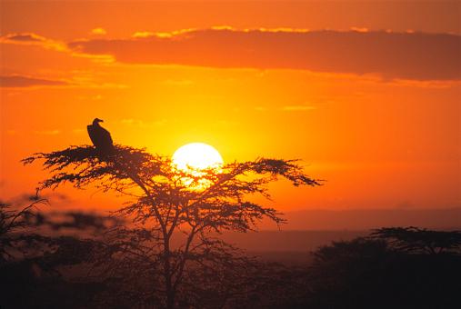 East Africa「Vulture at Sunrise」:スマホ壁紙(18)