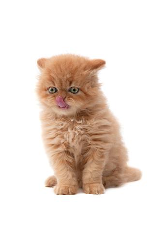 子猫「小さな猫」:スマホ壁紙(14)