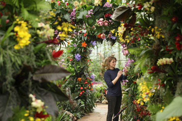 Richmond-upon-Thames「Kew Gardens Escape The Winter Blues And Launch Their Trpoical Extravaganza」:写真・画像(5)[壁紙.com]