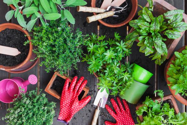 Planting culinary herbs on balcony:スマホ壁紙(壁紙.com)