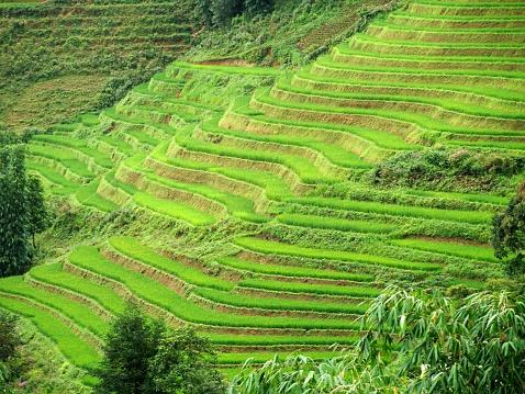 Vietnam「Rice terraces in Sapa」:スマホ壁紙(13)