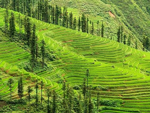 Vietnam「Rice terraces in Sapa」:スマホ壁紙(15)