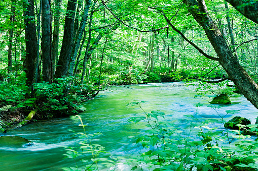 Green Color「Peaceful Mountain Stream Scene in Japan」:スマホ壁紙(19)