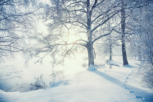 Winter in Sweden:スマホ壁紙(壁紙.com)