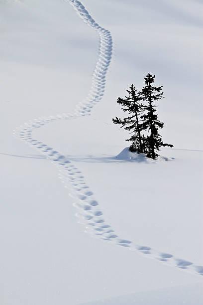 Footstep trail on snow:スマホ壁紙(壁紙.com)