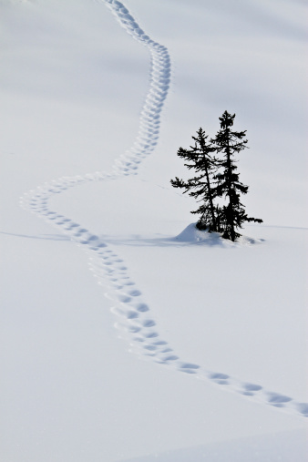 Graubunden Canton「Footstep trail on snow」:スマホ壁紙(10)