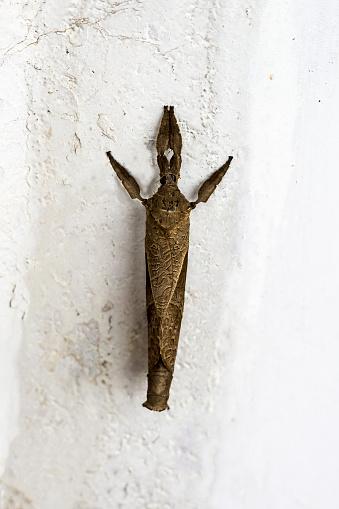 Dethan Punalur「Macro shot of a Dry leaf shaped moth」:スマホ壁紙(15)