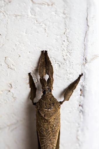 Dethan Punalur「Macro shot of a Dry leaf shaped moth」:スマホ壁紙(17)