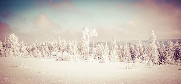 おとぎ話「Germany, Baden-Wuerttemberg, Black Forest, Schliffkopf, snow-covered landscape」:スマホ壁紙(15)